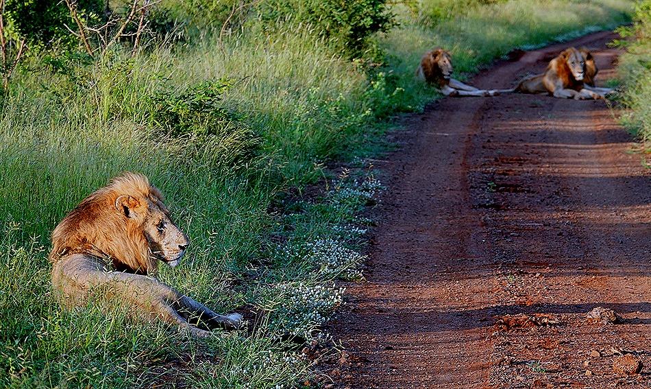 50. Kruger Nat Park, South Africa
