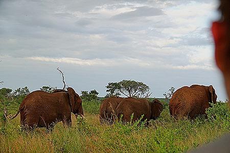 501. Kruger Nat Park, South Africa