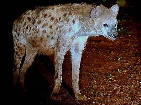 503. Kruger Nat Park, South Africa