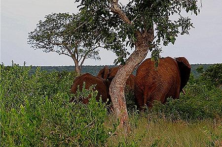 505. Kruger Nat Park, South Africa