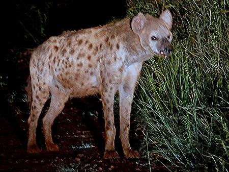 508. Kruger Nat Park, South Africa