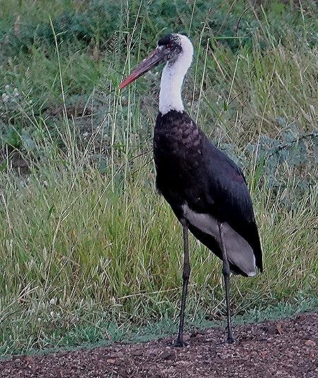 512. Kruger Nat Park, South Africa