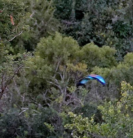 515. Kruger Nat Park, South Africa