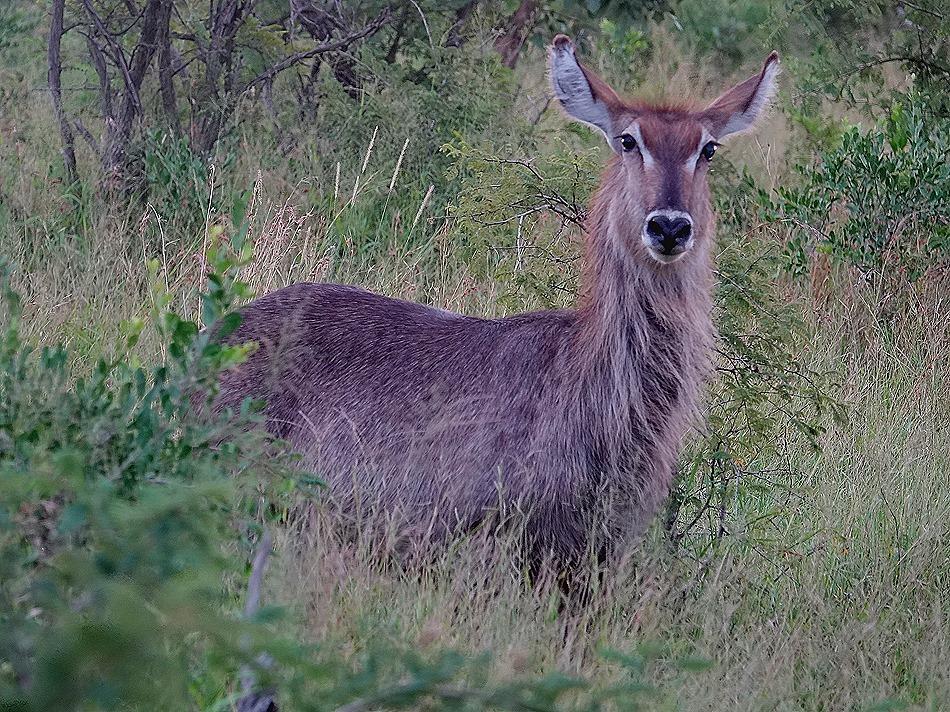 517. Kruger Nat Park, South Africa