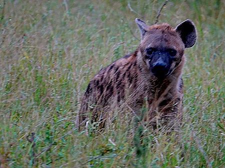 52. Kruger Nat Park, South Africa