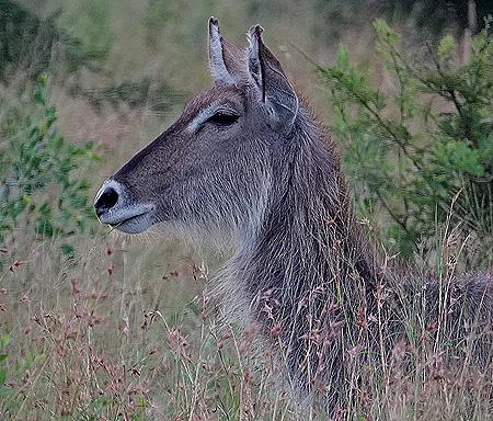 520. Kruger Nat Park, South Africa