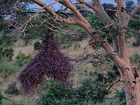 527. Kruger Nat Park, South Africa