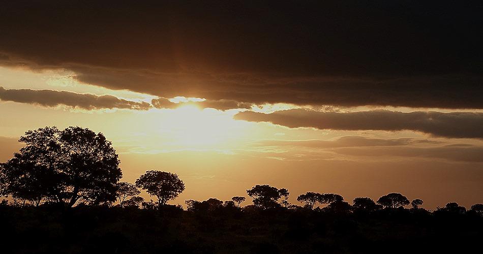 534. Kruger Nat Park, South Africa