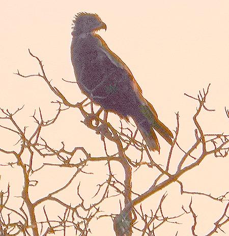 535. Kruger Nat Park, South Africa