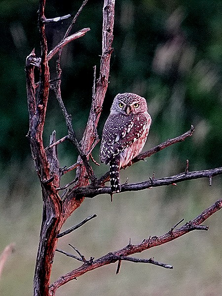 536. Kruger Nat Park, South Africa