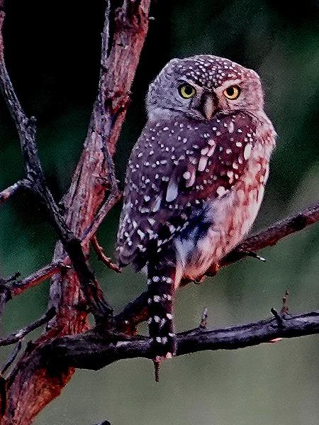 537. Kruger Nat Park, South Africa