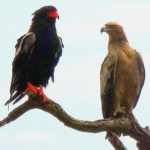 54. 010418Maputo, Mozambique & Kruger Nat Park, South Africa