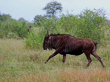 54. Kruger Nat Park, South Africa