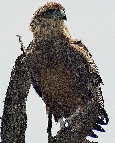 55. 010418Maputo, Mozambique & Kruger Nat Park, South Africa