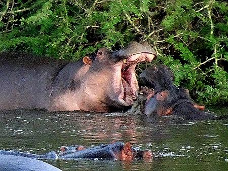 554. Kruger Nat Park, South Africa