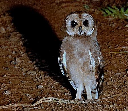 555. Kruger Nat Park, South Africa
