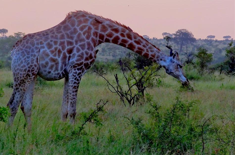 558. Kruger Nat Park, South Africa