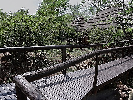 562a. Kruger Nat Park, South Africa_stitch