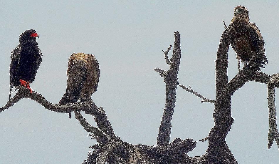 57. 010418Maputo, Mozambique & Kruger Nat Park, South Africa