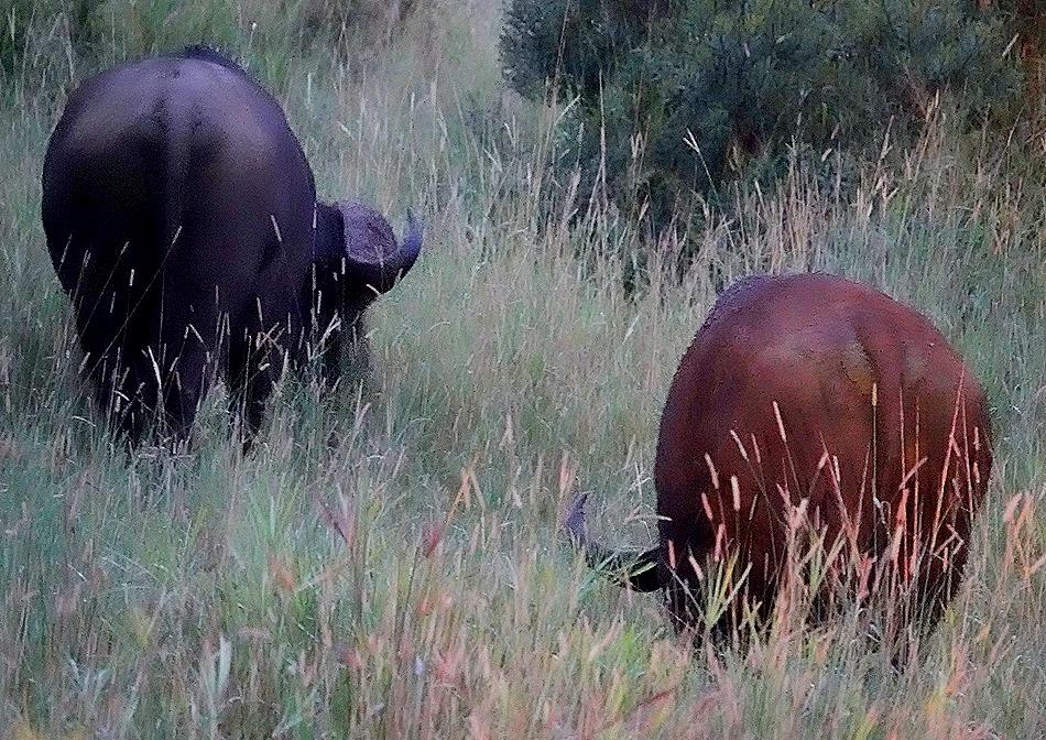575. Kruger Nat Park, South Africa