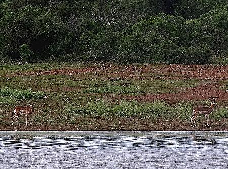 576. Kruger Nat Park, South Africa