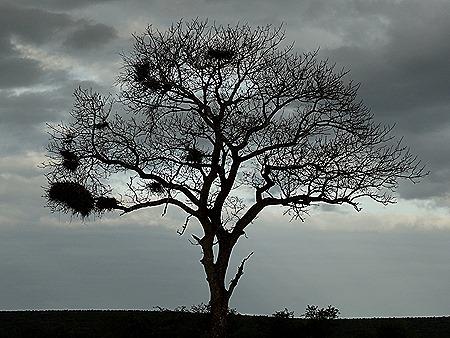 586. Kruger Nat Park, South Africa