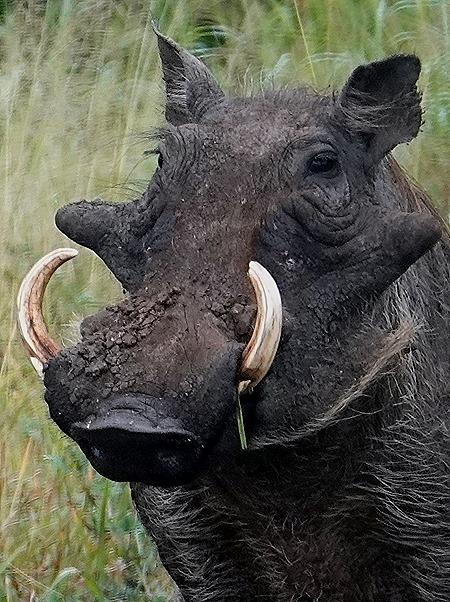 59a. Kruger Nat Park, South Africa