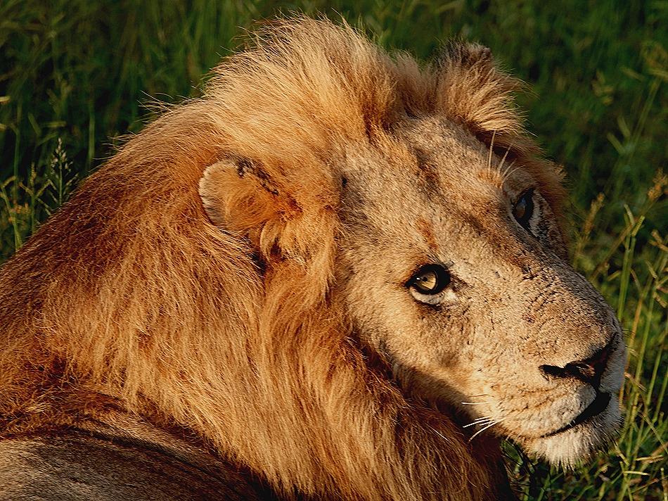60. Kruger Nat Park, South Africa