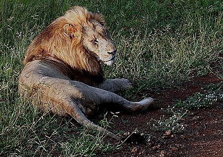 61. Kruger Nat Park, South Africa