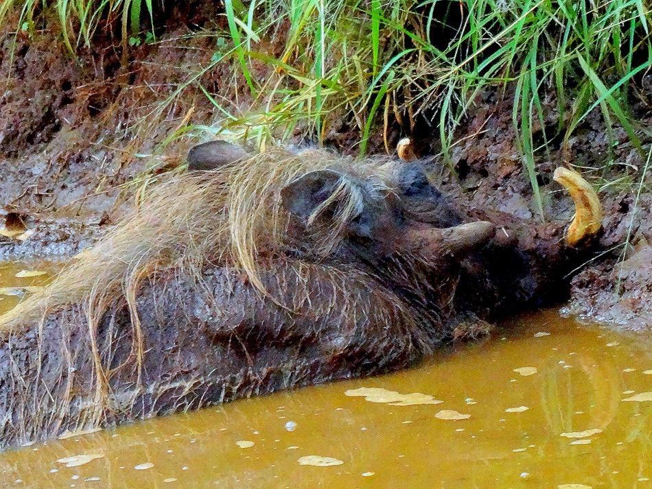 62. 010418Maputo, Mozambique & Kruger Nat Park, South Africa