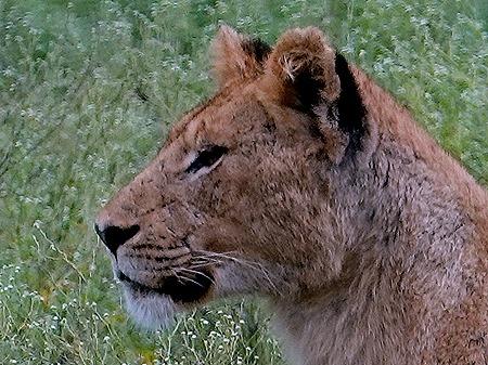 65a. Kruger Nat Park, South Africa