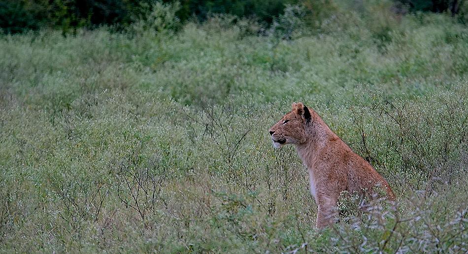 66. Kruger Nat Park, South Africa