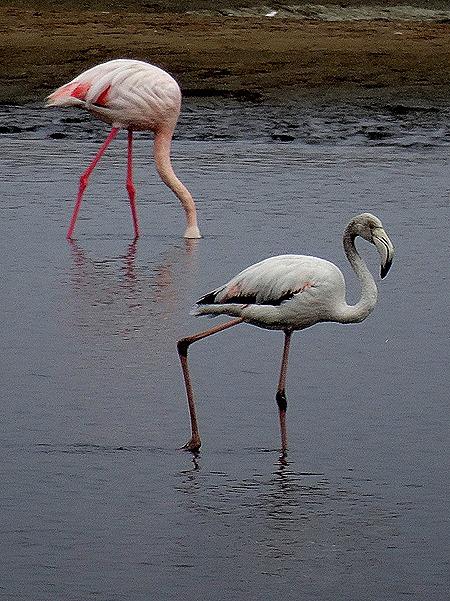 7. Walvis Bay, Namibia080418
