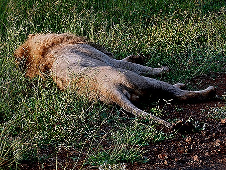 70. Kruger Nat Park, South Africa