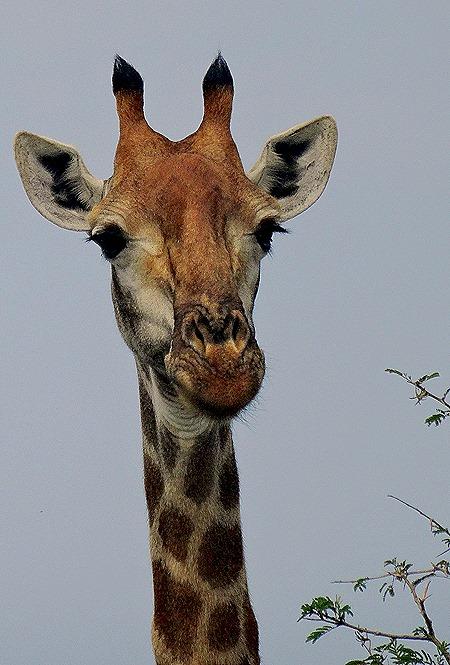 72. 010418Maputo, Mozambique & Kruger Nat Park, South Africa