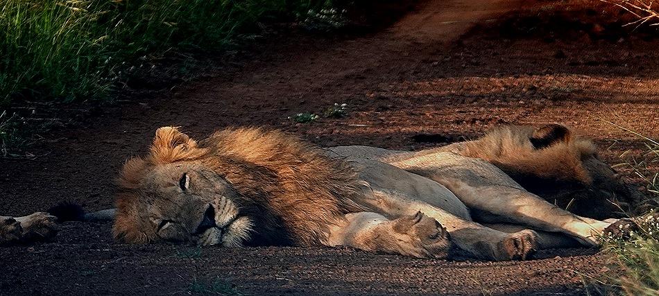 72. Kruger Nat Park, South Africa