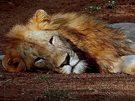 74. Kruger Nat Park, South Africa