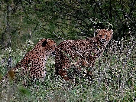 78. Kruger Nat Park, South Africa