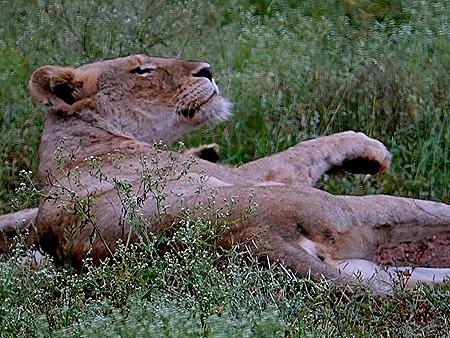 79. Kruger Nat Park, South Africa