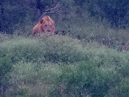 8. Kruger Nat Park, South Africa