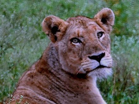 80. Kruger Nat Park, South Africa
