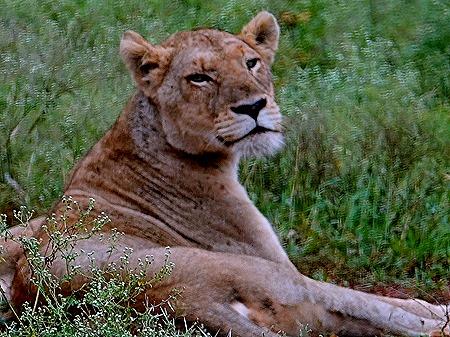 81. Kruger Nat Park, South Africa
