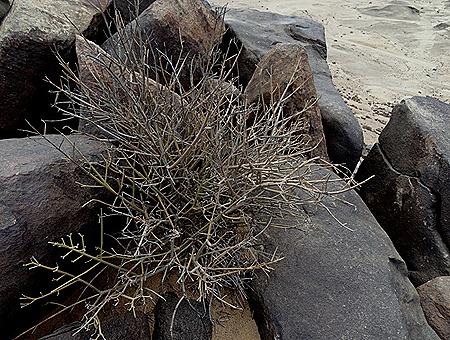 81a. Walvis Bay, Namibia080418_stitch