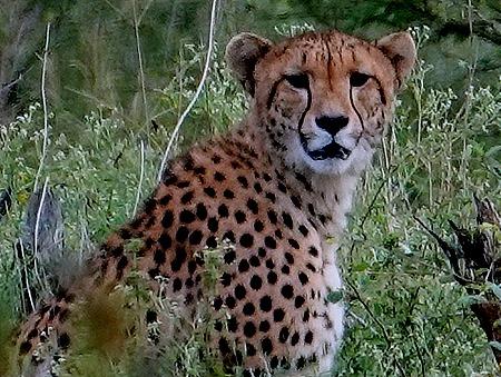 83. Kruger Nat Park, South Africa