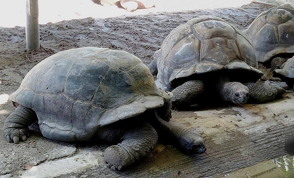 83a. Victoria, Mahe, Seychelles_stitch