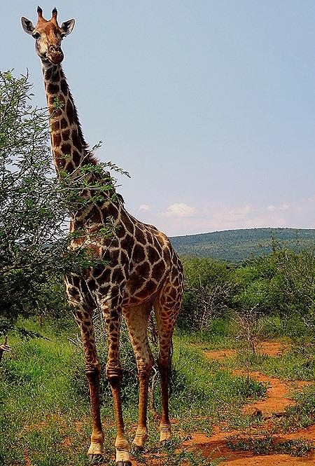 85. 010418Maputo, Mozambique & Kruger Nat Park, South Africa