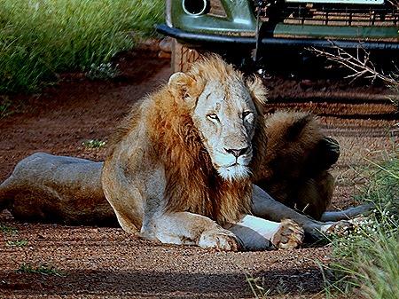 87. Kruger Nat Park, South Africa