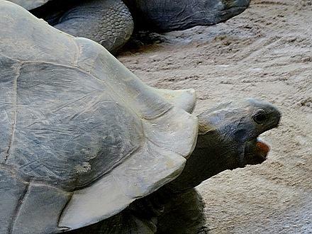 87. Victoria, Mahe, Seychelles