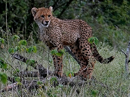 89. Kruger Nat Park, South Africa
