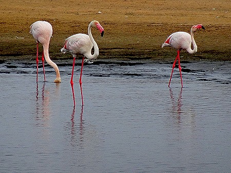 9. Walvis Bay, Namibia080418